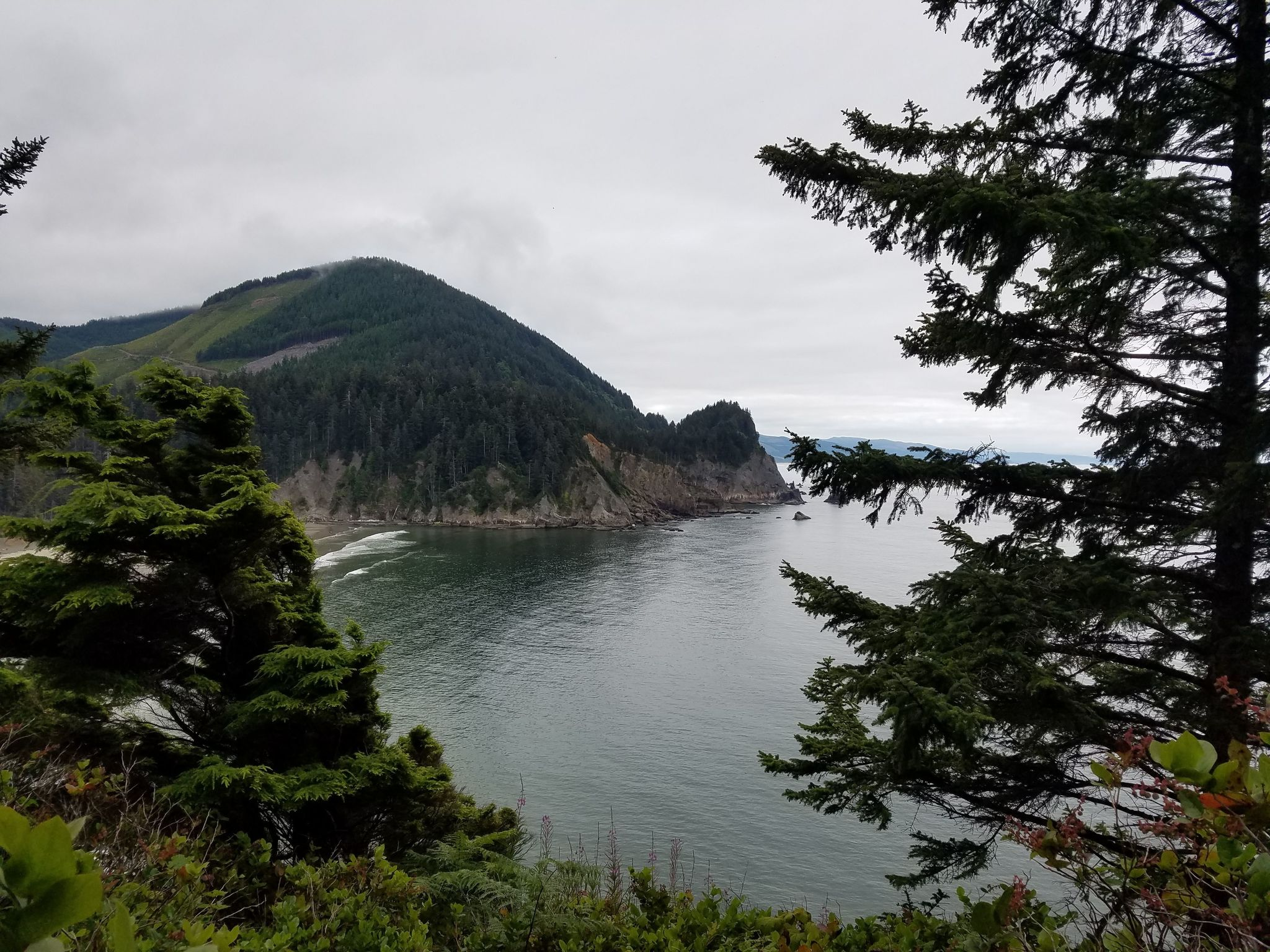 A Must-Try Hike at Cape Falcon Trail, Oregon