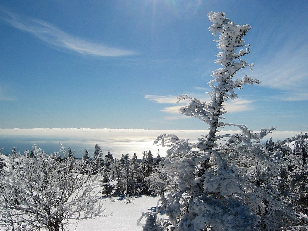 Go to Gorham Mountain Trail, Maine, for a Memorable Winter Hike
