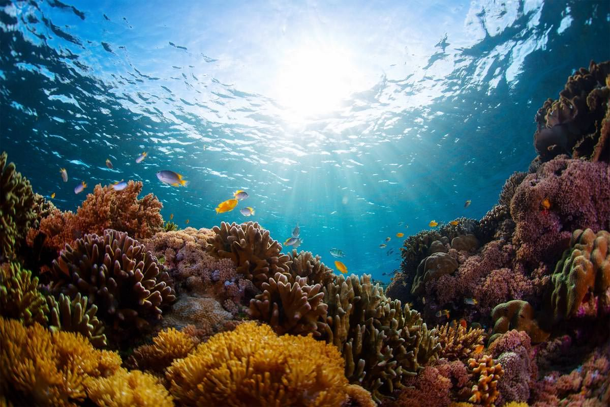 The Top 3 Marine Wildlife Experiences Everyone Should Have